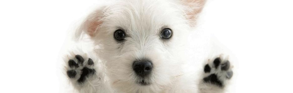 Home Trimsalon - Honde...