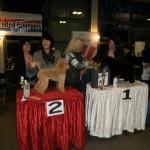 """DUG, Internationale trimkampioenschap 18 maart 2012 te Best. 2e plaats behaald in de categorie """"Poedels"""""""